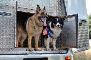 Служебно-поисковые собаки.